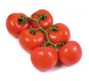 עגבניות אשכול